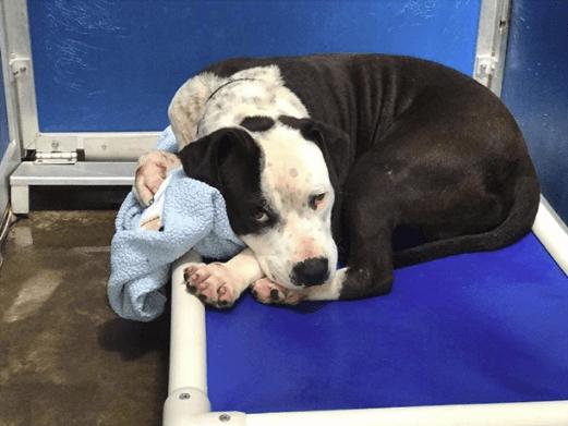 dog-boo-blanket-2
