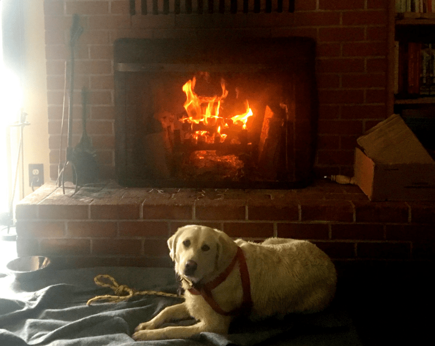 dog-yoda-boat-rescue-3