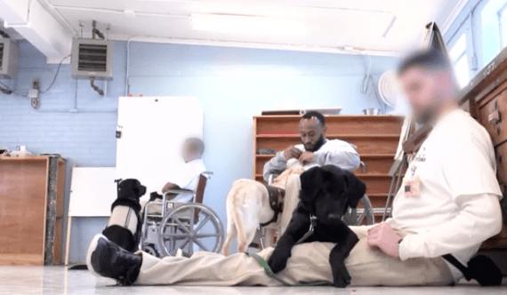 inmates_service_dogs_veterans_1