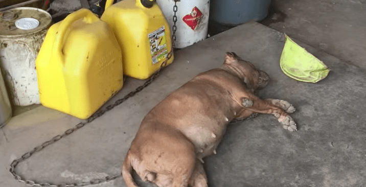 lola_dog_chained_garage_rescue_6