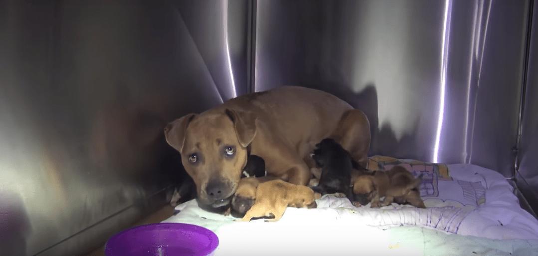 puppies-storm-california-4