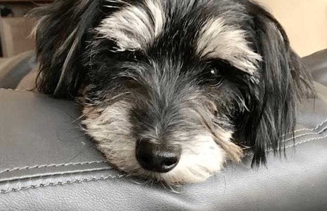 zeus_rescue_mange_dog_6