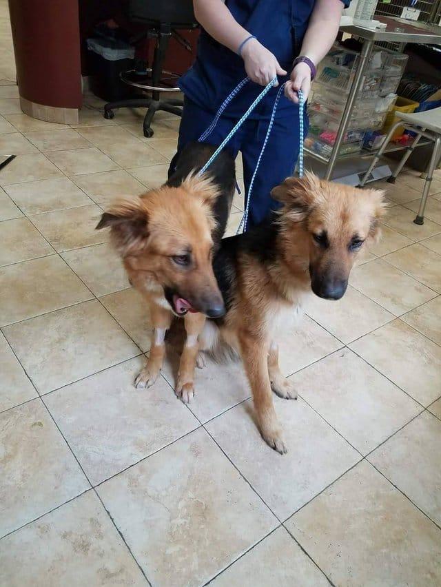 apollo_adonis_dog_pair_rescue_1