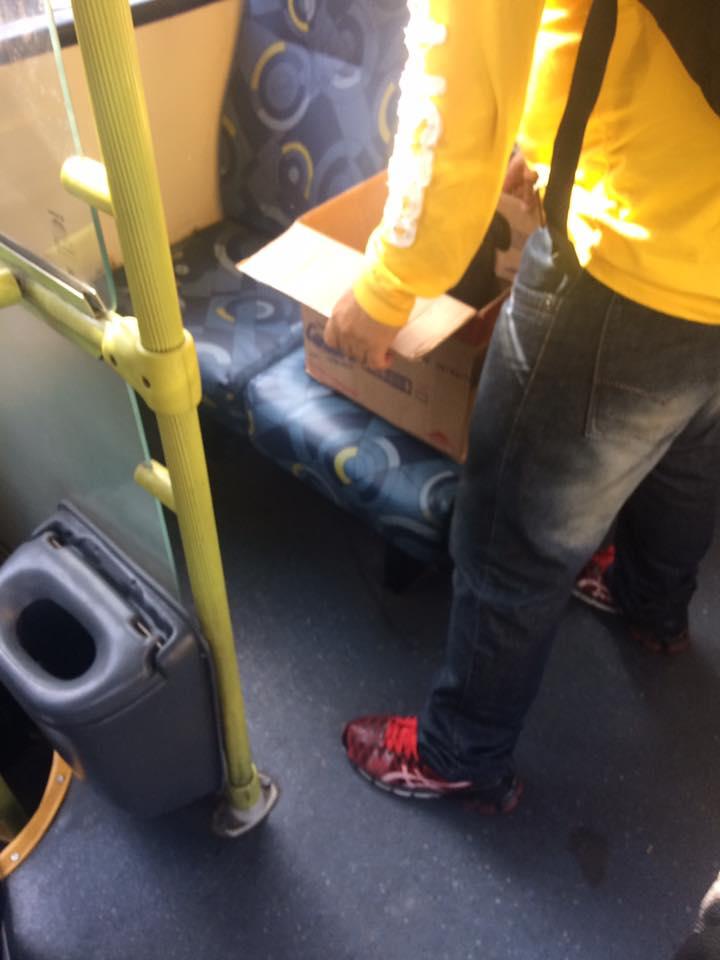 box-bus-brazil-1 (1)