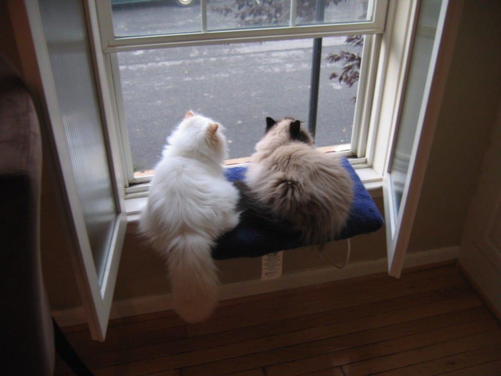 cat-shea-highrise-5