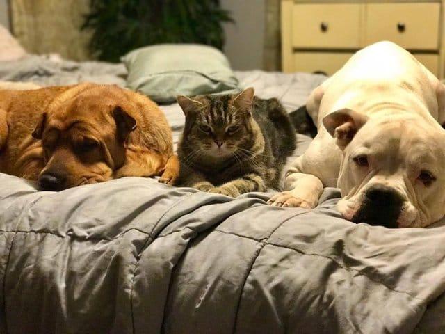 chevy_dog_3_adoptions_2