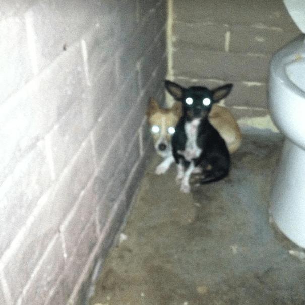 dog-bathroom-rescue-2