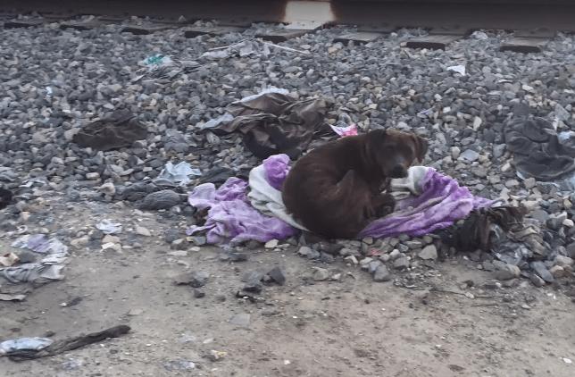 dog-cassandra-railroad-8