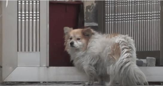 dog-hachiko-korea-4