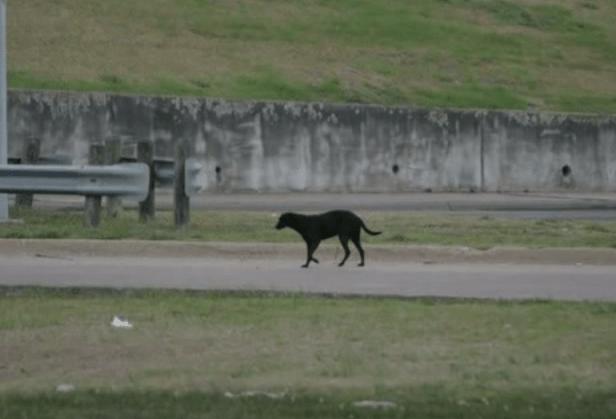 dog-norah-puppies-1