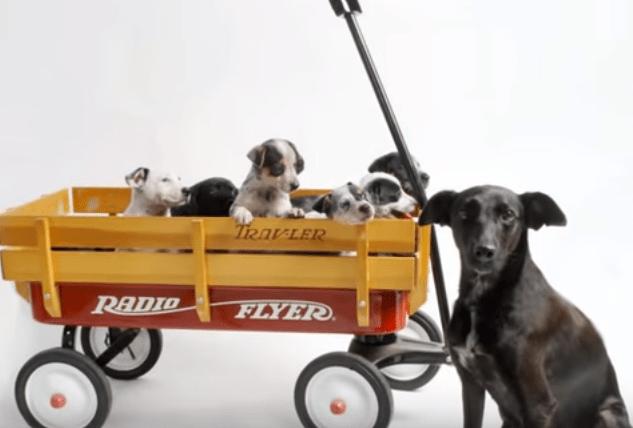 dog-norah-puppies-4