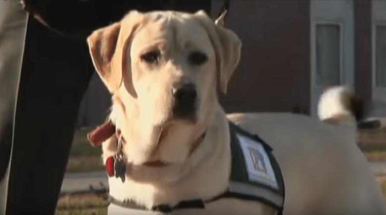 dog-pax-veteran-1