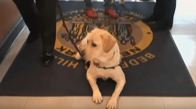 dog-pax-veteran-2