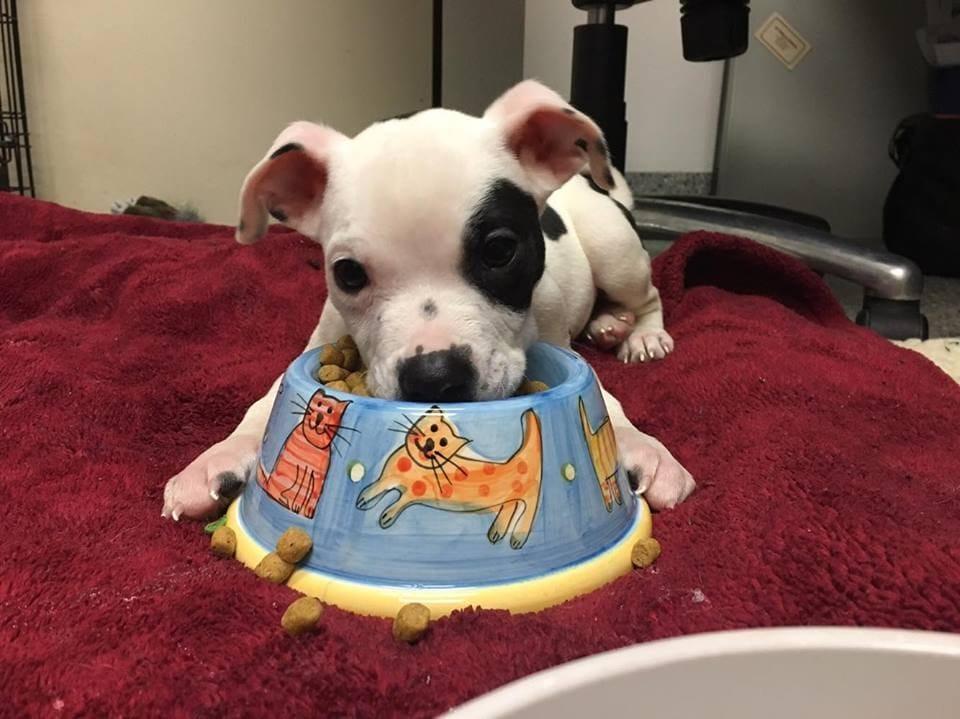 dog-petey-rescue-3