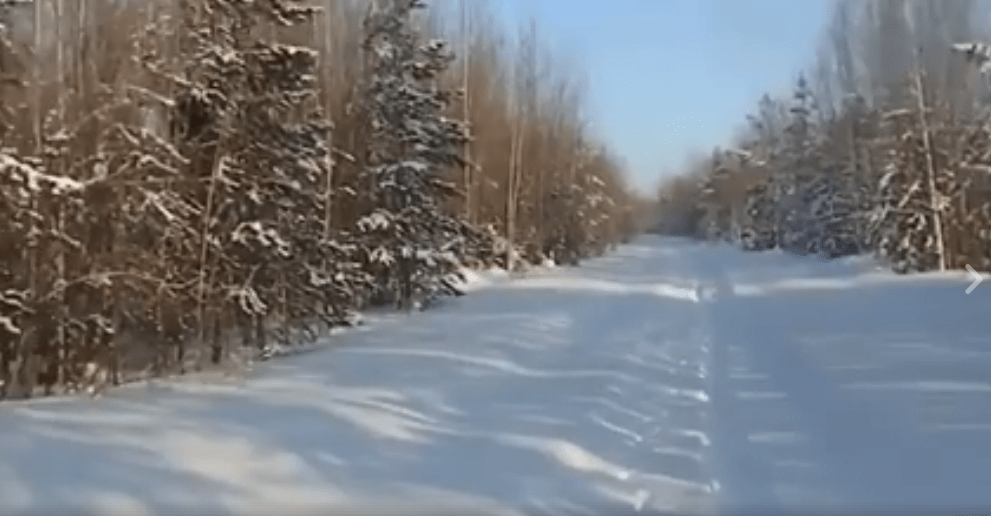 dog-russia-snow-2