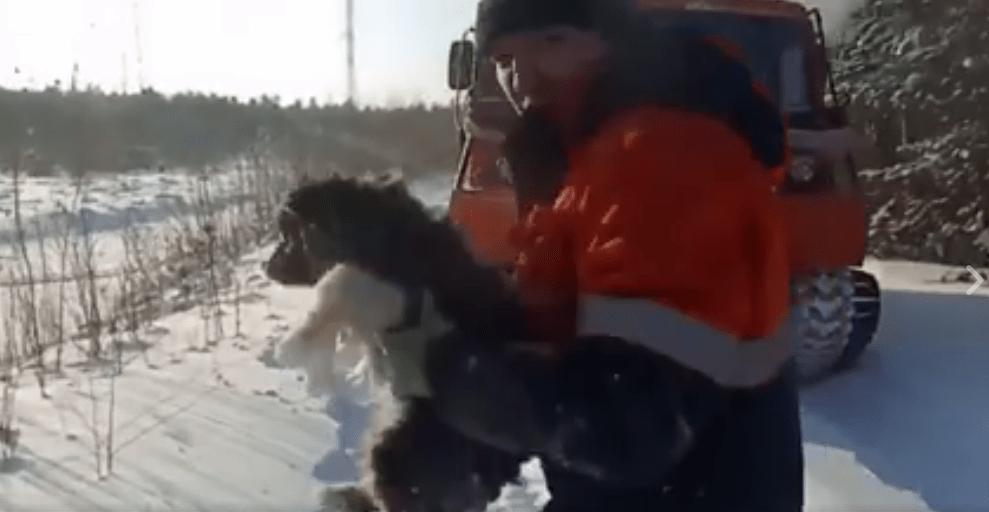 dog-russia-snow-3
