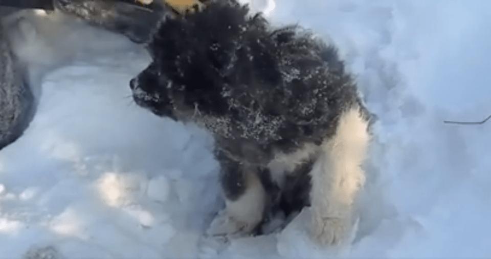 dog-russia-snow-4