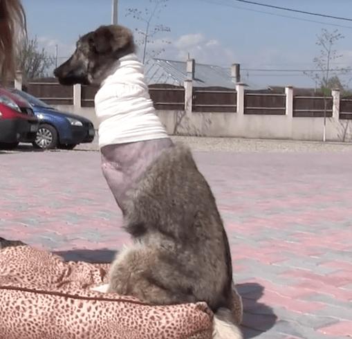 dog-weebly-trauma-2