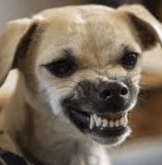 dog_emotions_list_6