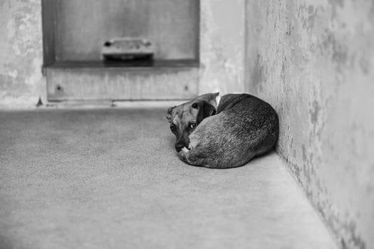 dog_no_name_los_angeles_photographer_1