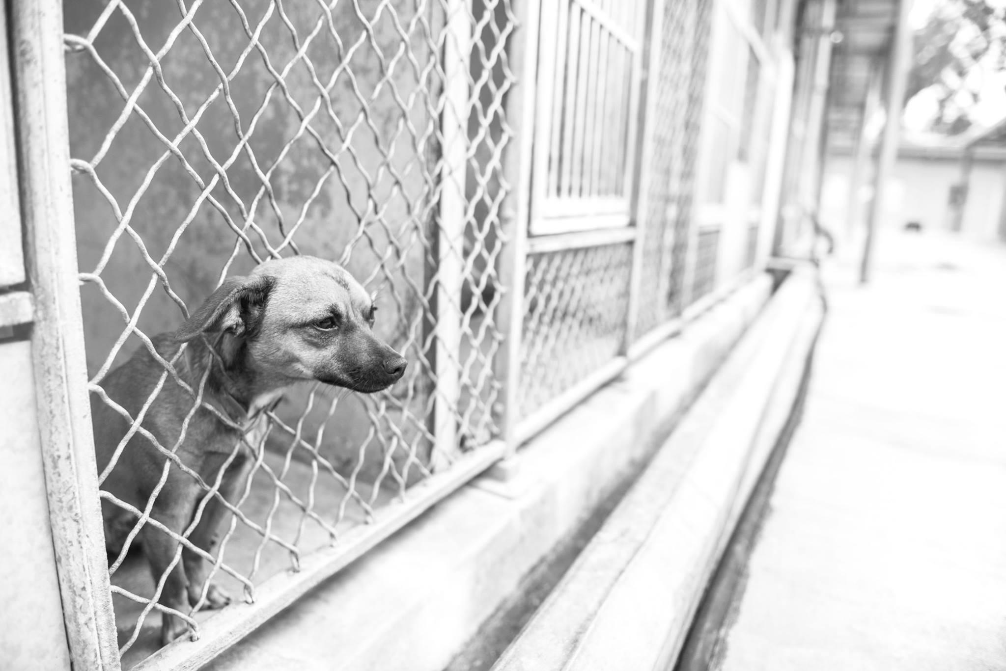 dog_no_name_los_angeles_photographer_4