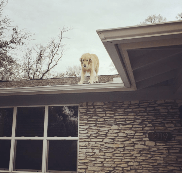 huck_the_roof_dog_1