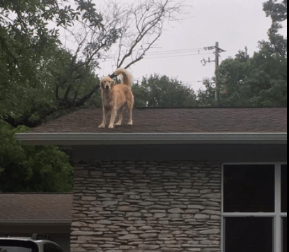 huck_the_roof_dog_3