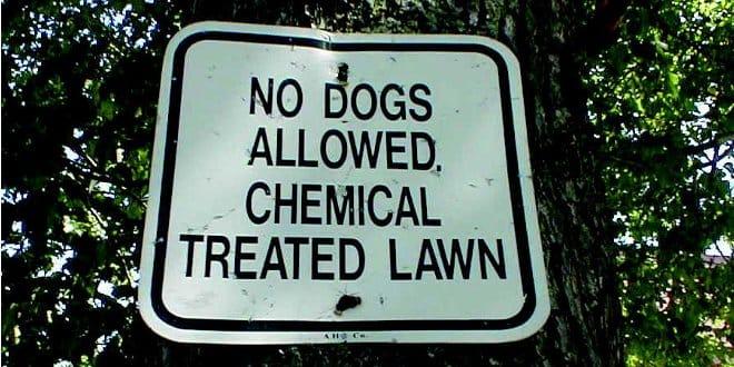 pet_toxins_list_4