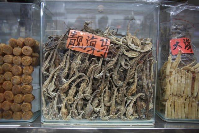 seahorses_medicine_shops_china_1