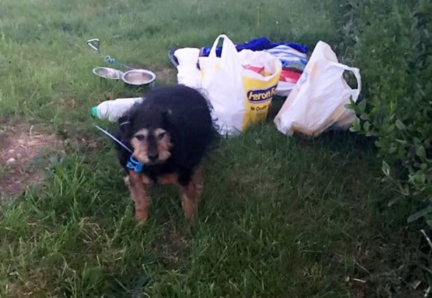 "An elderly terrier has been abandoned in a cold, wet field with bag of food and a bowl of water - and a note saying ""I don't need a dog"". See Ross Parry story RPYDOG; The unwanted dog was found behind a bush near Oldcotes car boot sale at 5am on April 23. Alan Webster, who runs the voluntary South Yorkshire Pet Ambulance animal rescue service, happened to be doing one of their regular fundraising car boot sales that morning. ""It was already there at 5am when we arrived. They had a blanket down which was wet through and chances are it had been there all night - maybe even all weekend,"" he said. ""It was behind a bush so if the car boot had been rained off it could still be there now - it's very irresponsible."