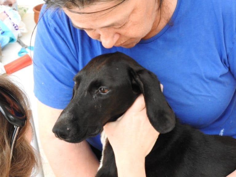 xenia-dog-paralysed-2