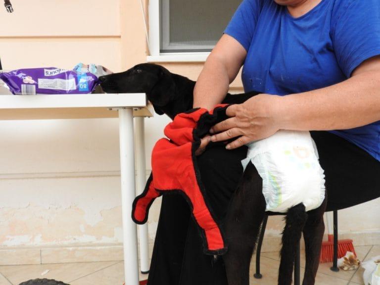 xenia-dog-paralysed-3