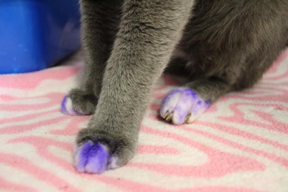 cat-purplepaws-1