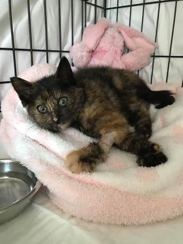 dave_highway_kitten_rescue_3