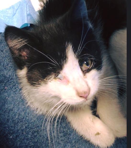 dave_highway_kitten_rescue_4