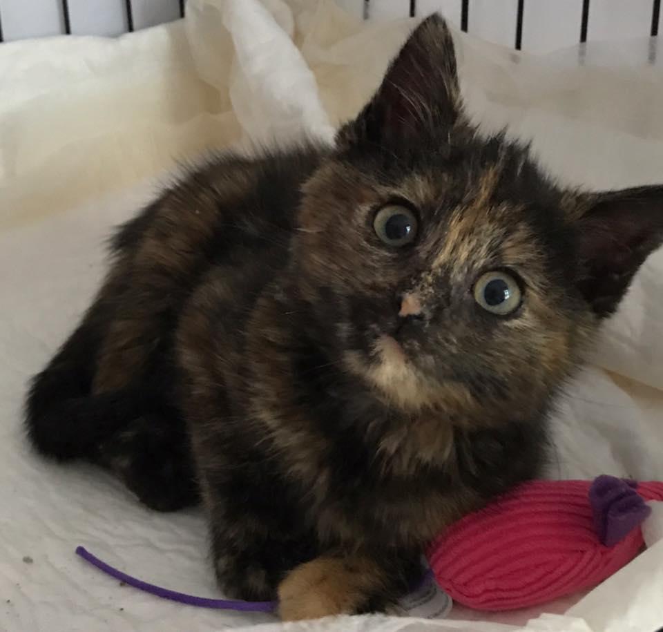 dave_highway_kitten_rescue_5