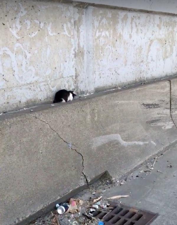 dave_highway_kitten_rescue_7