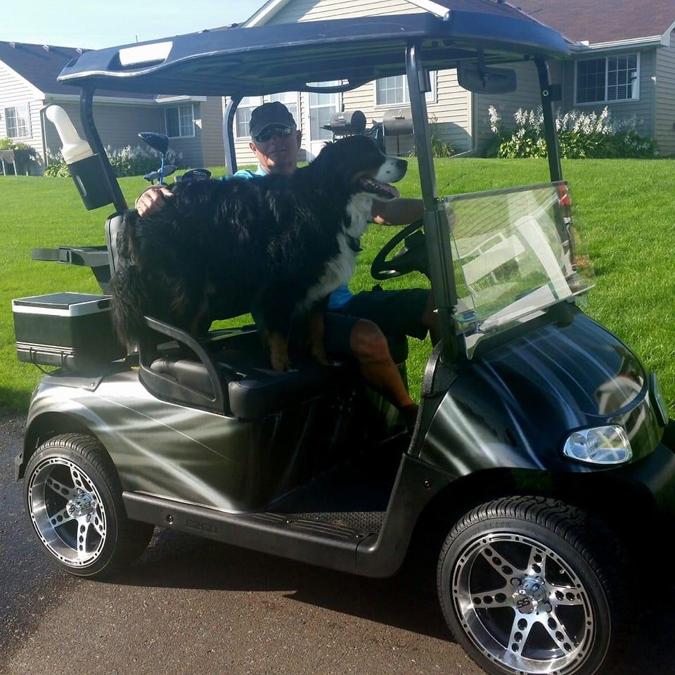 davos_dog_golf_balls_3