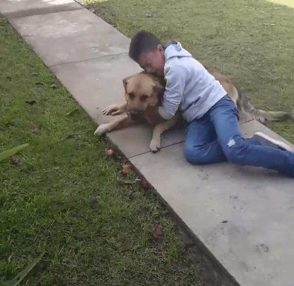dog-jack-argentina-2