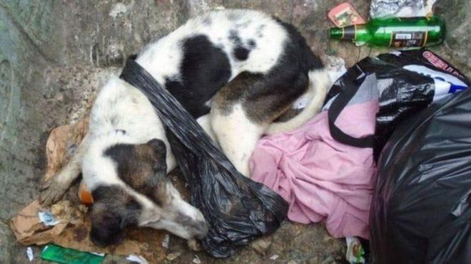 dougal_dog_abuse_dumpster_2