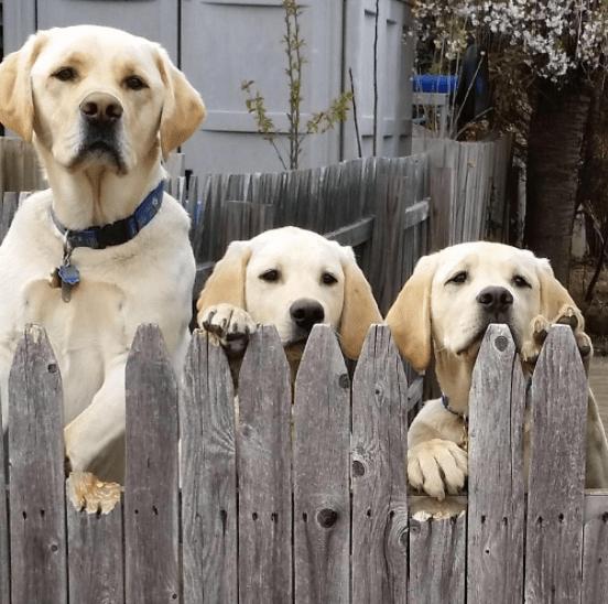 escape_artist_dogs_1
