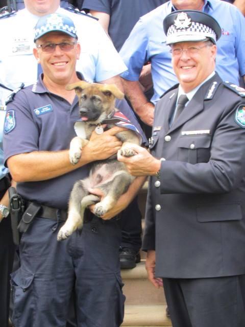 gavel-policedog-1