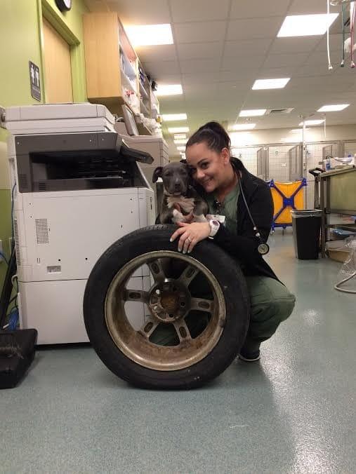 jade_puppy_tire_stuck_1