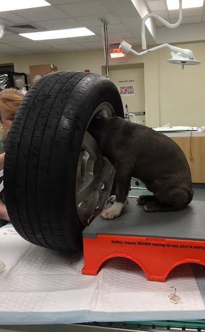 jade_puppy_tire_stuck_3