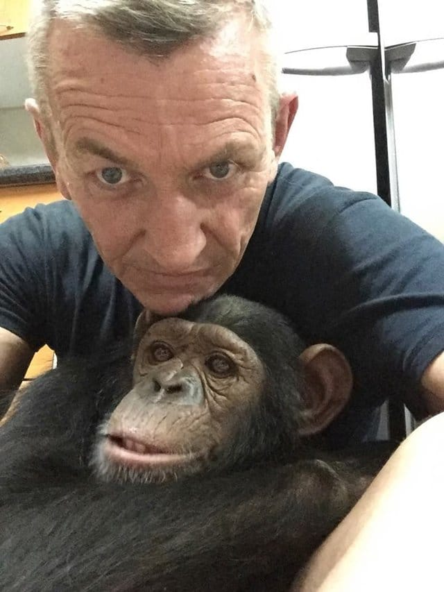 leila_chimp_chained_rescue_2