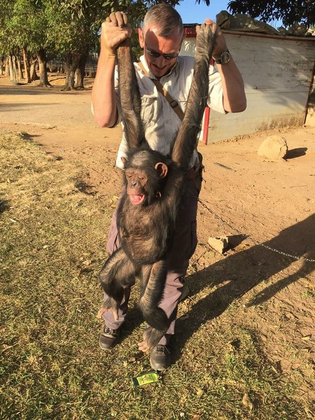 leila_chimp_chained_rescue_4