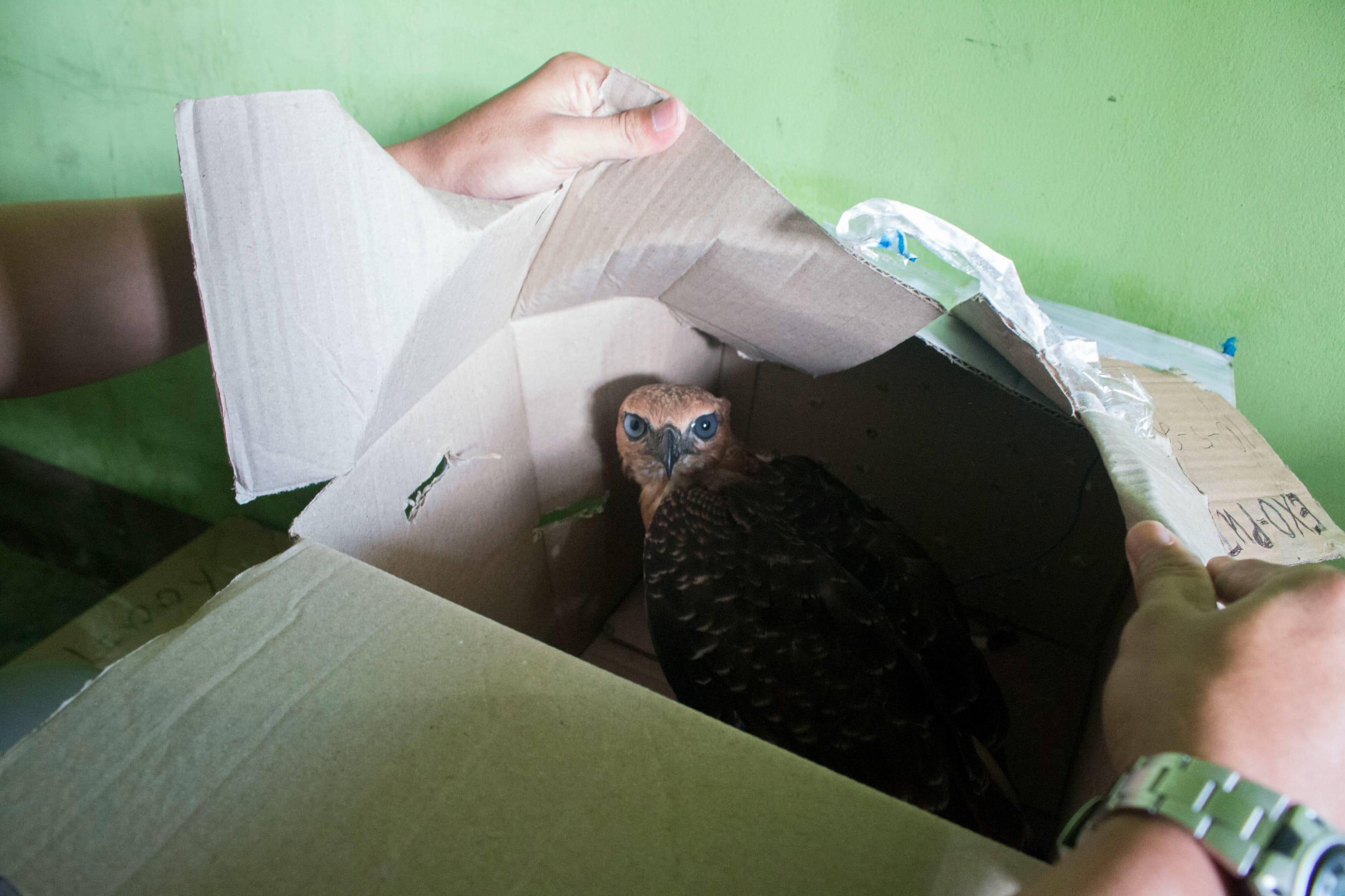 warehouse_raid_eagles_indonesia_1