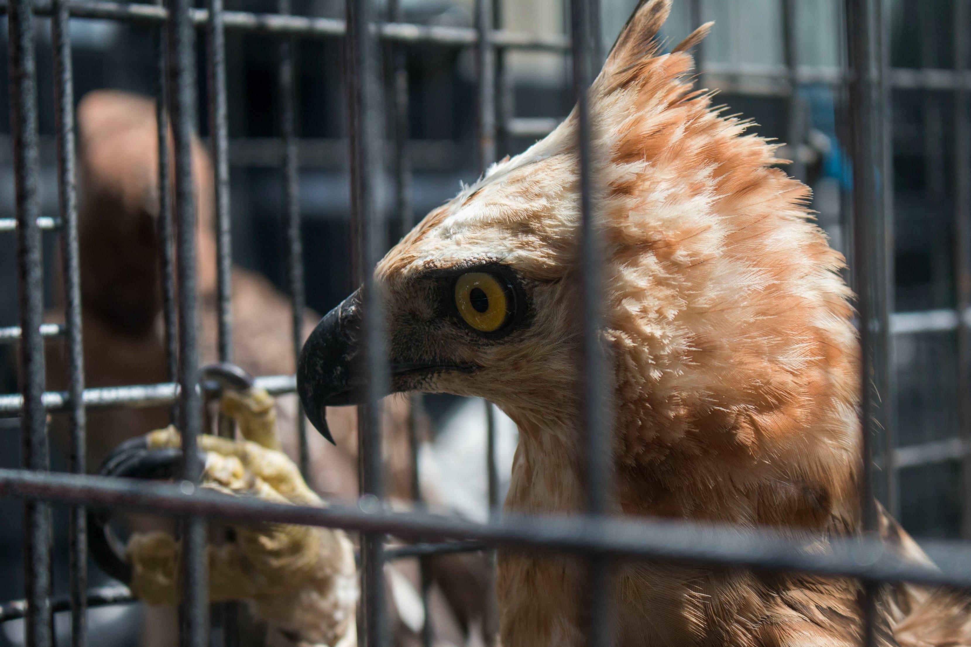 warehouse_raid_eagles_indonesia_2