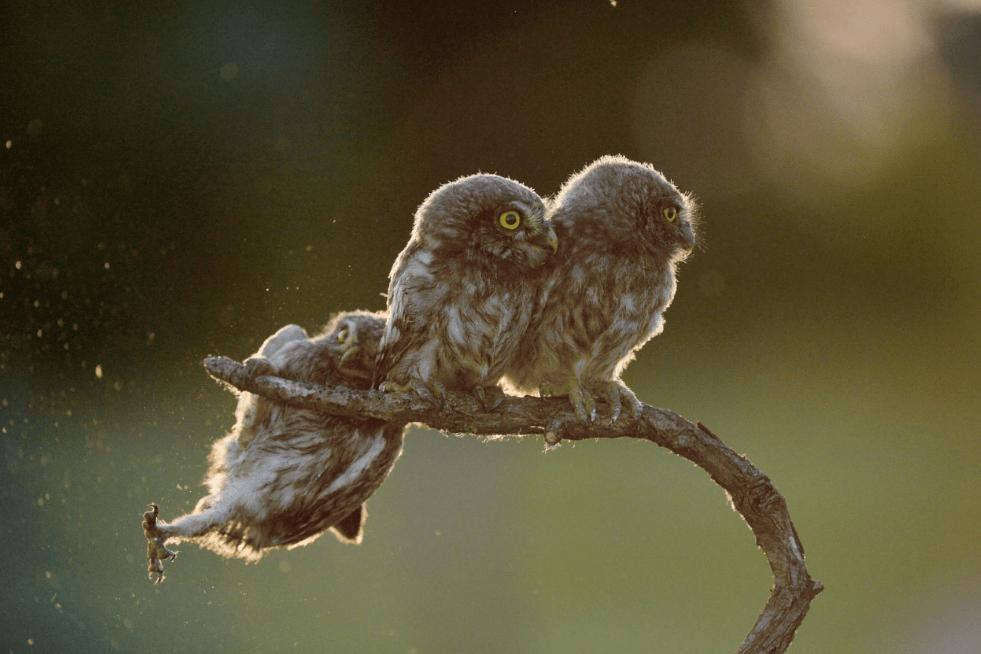 animal wildlife photography awards