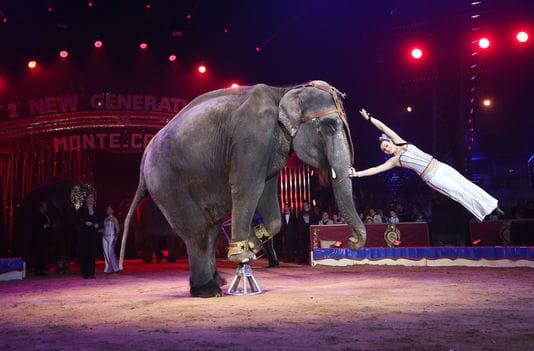 scotland bans animal circuses
